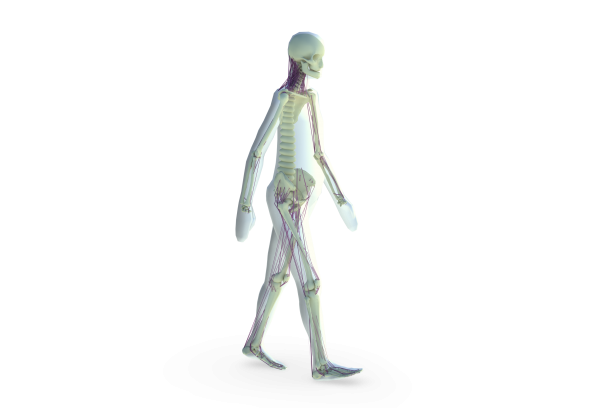 Madymo Active Human standing